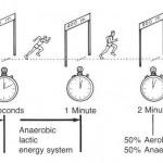 De 3 energiesystemen op een rijtje; de chemie van supersnel tot onuitputtelijk